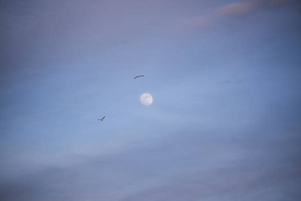 Photograph - Fly Me To The Moon by Toby McGuire