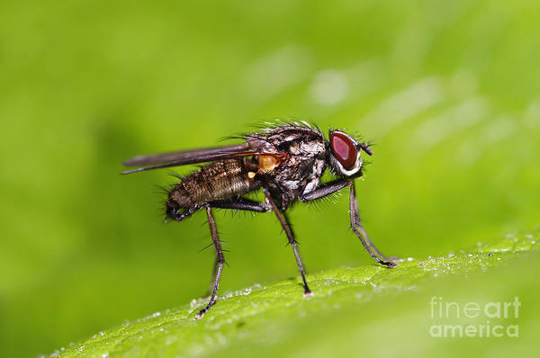 Wall Art - Photograph - Fly On The Leaf by Michal Boubin