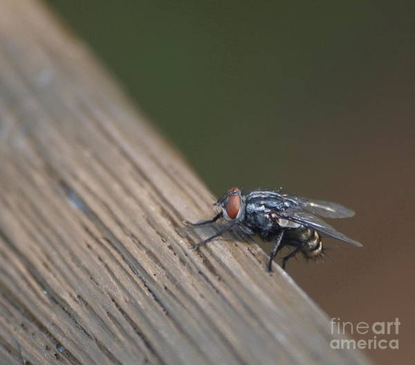 Photograph - Fly On The Wall by Vivian Martin