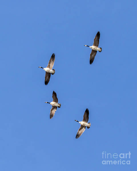 Photograph - Fly Over by Phil Spitze
