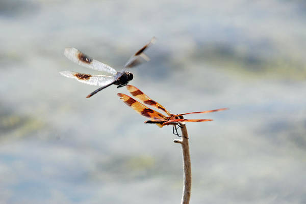 Photograph - Fly Over by Teresa Blanton
