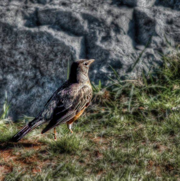 Photograph - Fly Robin Fly by Pennie McCracken