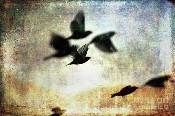 Photograph - Fly With The Mood by Randi Grace Nilsberg