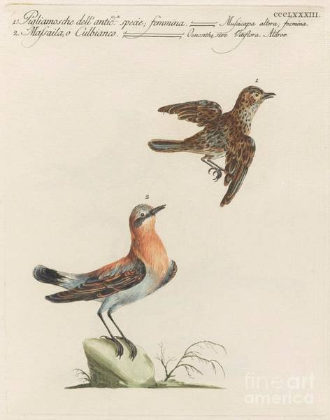 Painting - Flycatchers  by Celestial Images