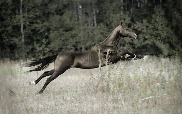 Photograph - Flying Arrow by Ekaterina Druz