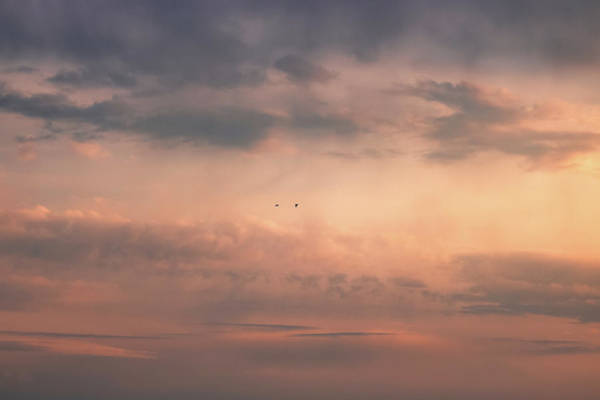 Photograph - Flying Away by Matteo Viviani
