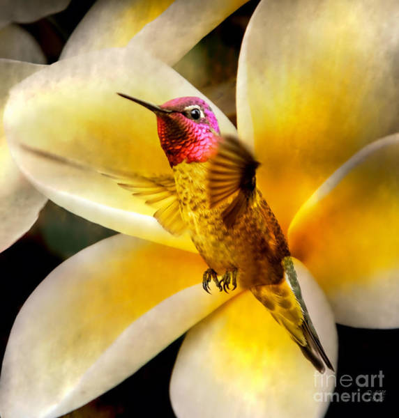 Photograph - Flying Beauty by David Millenheft