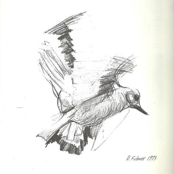 Drawing - Flying Bird Sketch by Denise F Fulmer