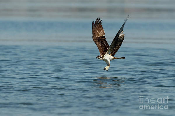 Photograph - Flying By by Beve Brown-Clark Photography