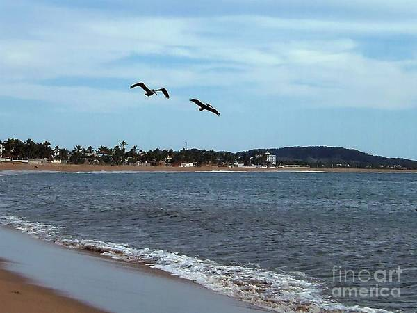 Photograph - Flying Companion by Victor K