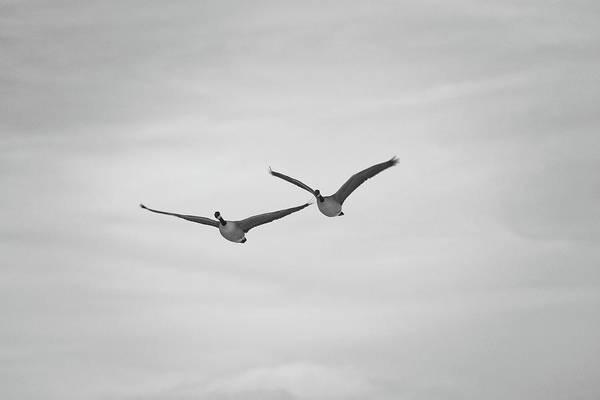 Flying Companions Art Print