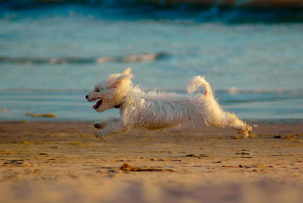 Summer Photograph - Flying Dog by Harry Spitz