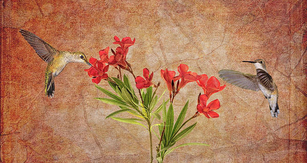 Photograph - Flying For Oleanders by Leda Robertson