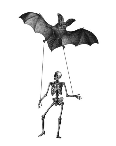 Foxes Digital Art - Flying Bat With Skeleton On A String by Madame Memento