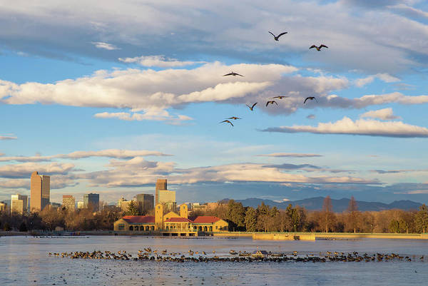 Wall Art - Photograph - Flying Geese Over The Denver Skyline From Ferril Lake At Denver  by Bridget Calip