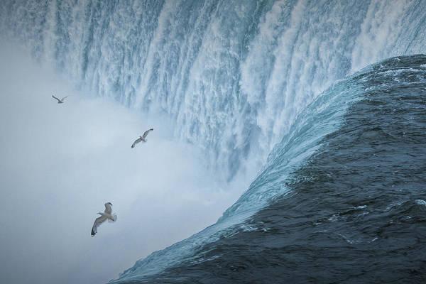 Photograph - Flying Gulls At Niagara Horseshoe Falls by Randall Nyhof