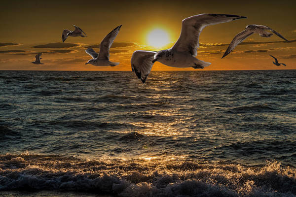 Photograph - Flying Gulls At Sunset by Randall Nyhof