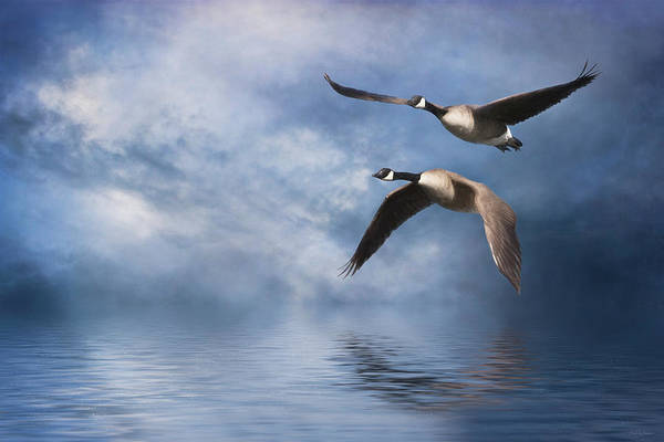 Digital Art - Flying Home by Nicole Wilde