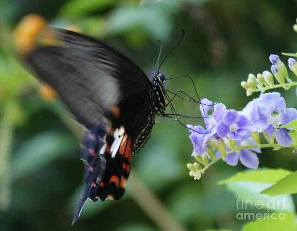Photograph - Flying In Close Up by Shelley Jones