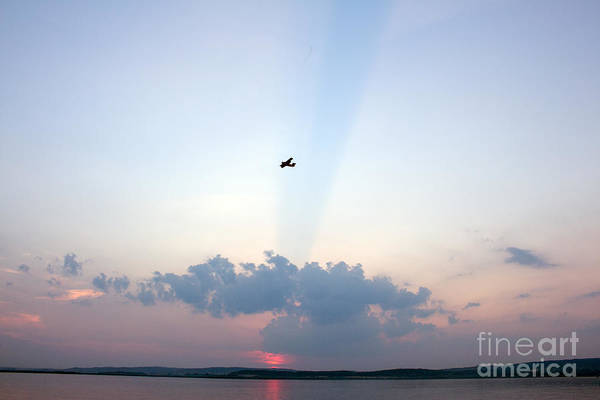 Photograph - Flying In Sunset by Odon Czintos