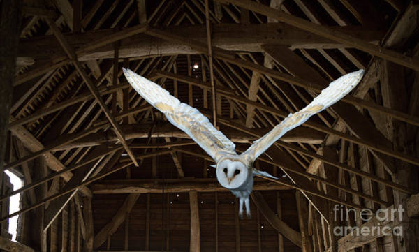 Photograph - Flying In The Barn by Warren Photographic