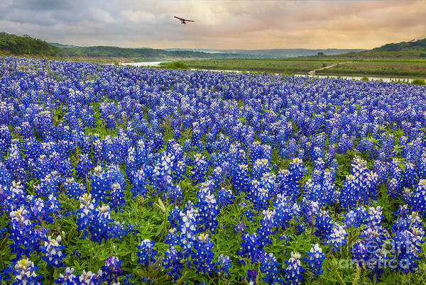 Colorado River Wall Art - Photograph - Bluebonnet Fields Forever by Inge Johnsson