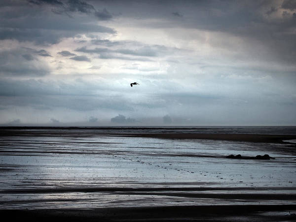 Northumbria Photograph - Northumbria -flying Over Footprints  by Philip Openshaw