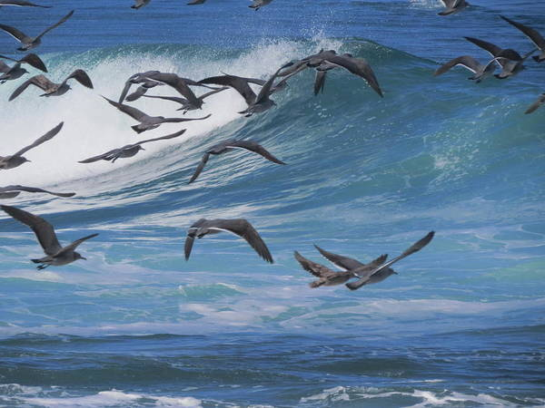 Arica Photograph - Flying Over The Sea by Surfing Arica
