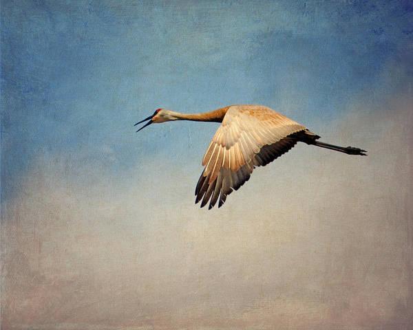 Squawk Photograph - Flying Sandhill Crane by Al  Mueller