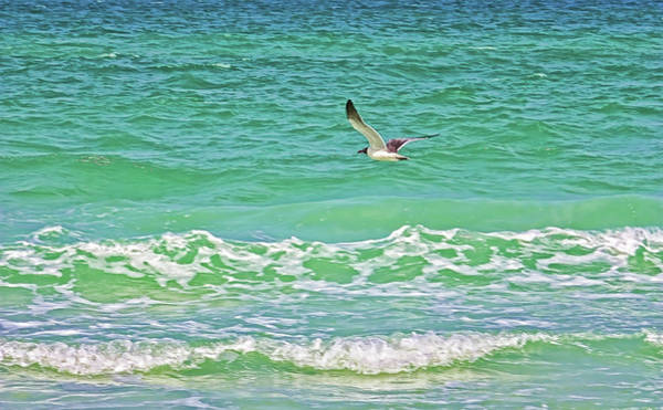 Wall Art - Photograph - Flying Solo by HH Photography of Florida