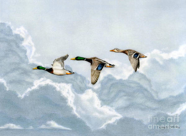 Cloud Sky Painting - Flying South by Sarah Batalka
