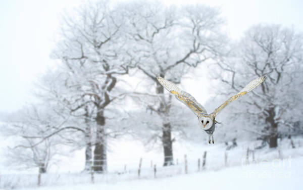 Photograph - Flying Through The Snow by Warren Photographic