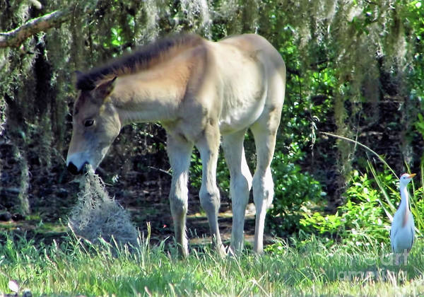 Photograph - Foal Playing With Moss by D Hackett