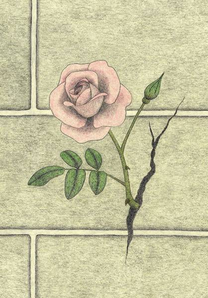 Garden Wall Drawing - Focus by Kathy Pullen
