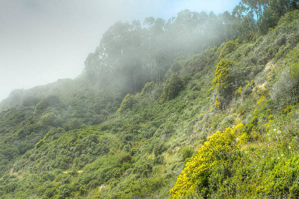 Photograph - Fog And Flowers by Peter Dyke