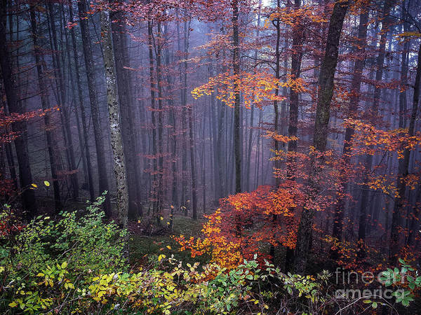 Wall Art - Photograph - Fog And Forest Colours by Elena Elisseeva