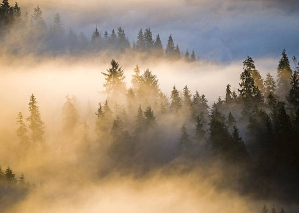 Photograph - Fog And Forest by Robert Potts