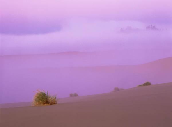Photograph - Fog And Sunlight by Robert Potts