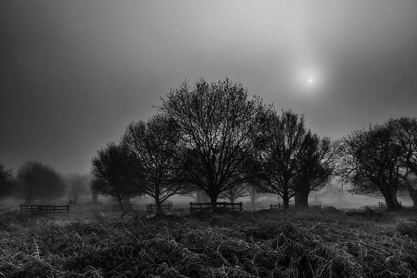 Photograph - Fog And Trees by Nick Bywater