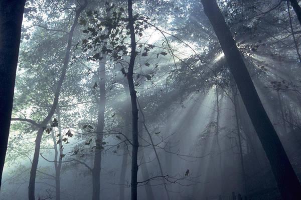Photograph - Fog Braids The Sunlight by Sven Brogren