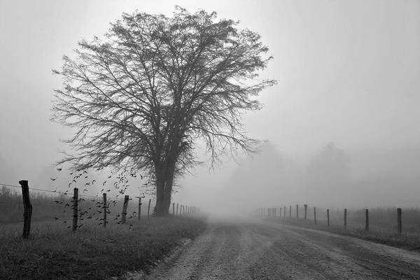 Wall Art - Digital Art - Fog Covered Lane by Lana Trussell