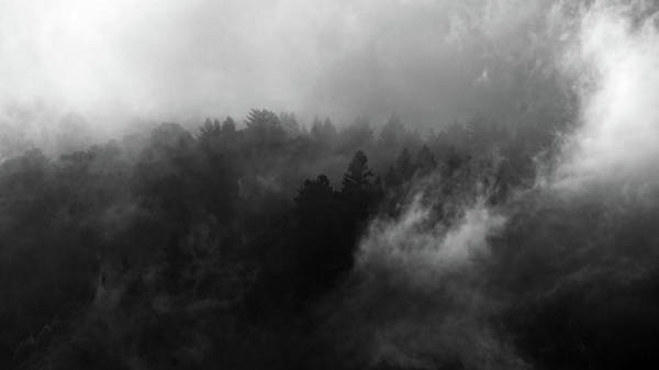 Photograph - Fog Forest by Eric Wiles