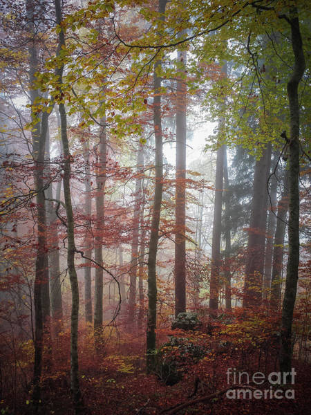 Wall Art - Photograph - Fog In Autumn Forest by Elena Elisseeva