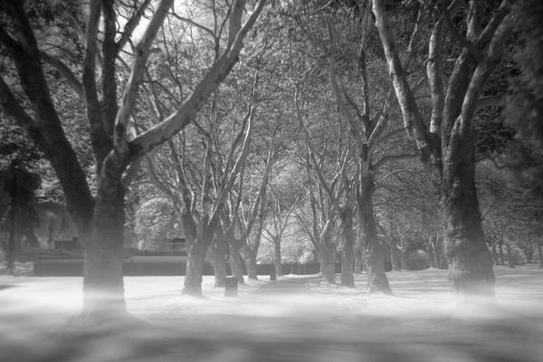 Wall Art - Photograph - Fog In Stanley Park by Julius Reque