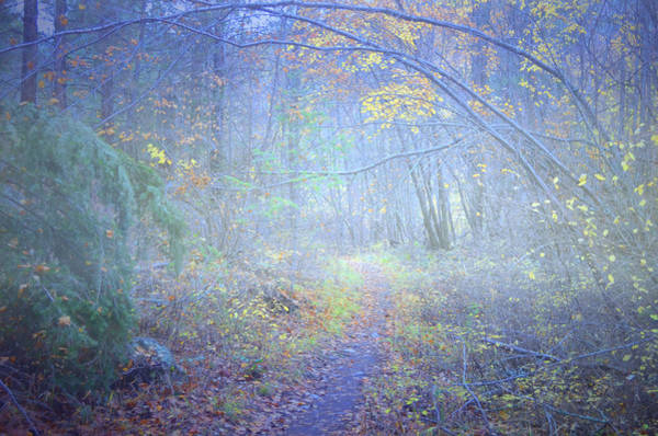 Photograph - Fog In The Forest At The End Of October 2 by Tara Turner