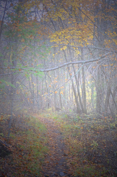 Photograph - Fog In The Forest At The End Of October 3 by Tara Turner