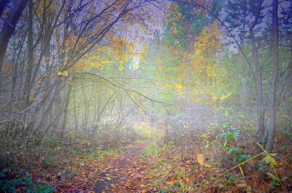 Photograph - Fog In The Forest At The End Of October 4 by Tara Turner