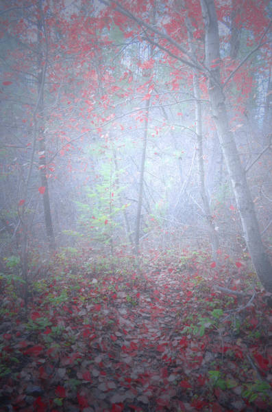 Photograph - Fog In The Forest At The End Of October 6 by Tara Turner