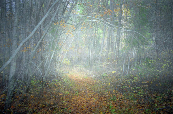 Photograph - Fog In The Forest At The End Of October 7 by Tara Turner