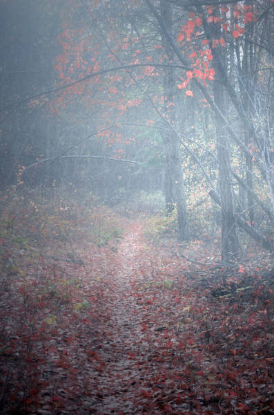 Photograph - Fog In The Forest At The End Of October by Tara Turner